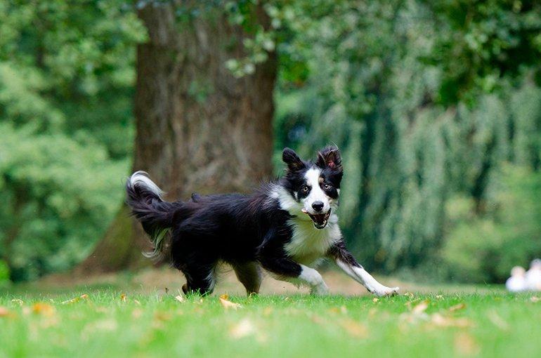 perro-corriendo-en-el-jardín