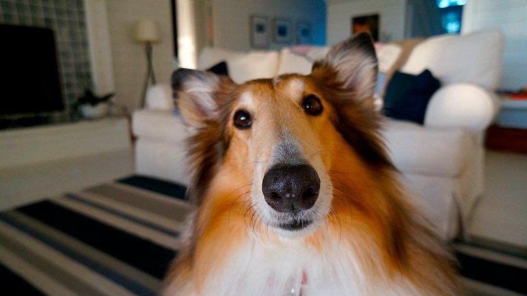 perro-jugando-en-casa-a-las-escondidas