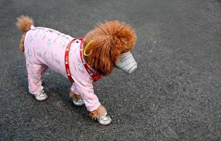 Mon chien peut-il me donner le Coronavirus?