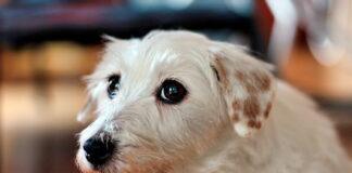 perro-preocupado