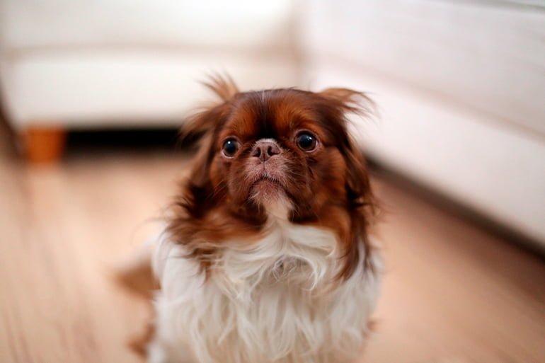 13 choses que vous ne devriez jamais faire avec votre chien
