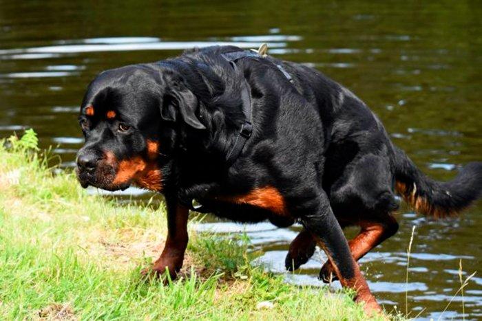 perro-saliendo-del-agua-tras-nadar
