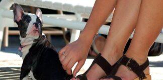 perro-sentado-junto-a-los-pies-de-su-humana