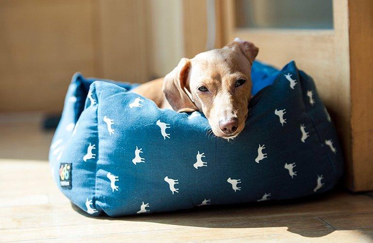Pourquoi les chiens grattent-ils ou tournent-ils sur le lit