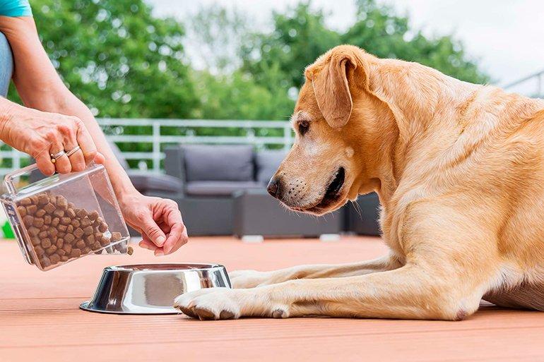 Mon chien mange très vite, comment l'éviter?