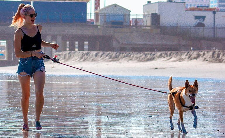 "woman-running-with-a-dog ""width ="" 770 ""height ="" 472 ""srcset ="" https://soyunperro.com/wp-content/uploads/2020/04/woman-running-with-a-dog .jpg 770w, https://soyunperro.com/wp-content/uploads/2020/04/mujer-corjando-con-un-perro-300x184.jpg 300w, https://soyunperro.com/wp-content/uploads /2020/04/mujer-corjando-con-un-perro-768x471.jpg 768w, https://soyunperro.com/wp-content/uploads/2020/04/mujer-corjando-con-un-perro-696x427. jpg 696w, https://soyunperro.com/wp-content/uploads/2020/04/mujer-corjando-con-un-perro-685x420.jpg 685w ""tailles ="" (largeur max: 770px) 100vw, 770px"