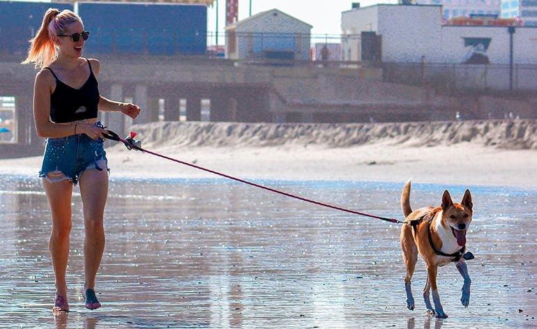 Combien d'exercice un chien doit-il faire par jour?