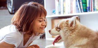 perro-con-buen-temperamento