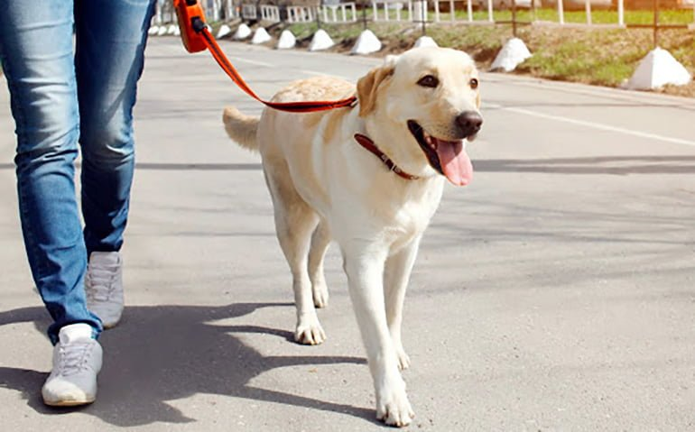 Conséquences de ne pas emmener le chien en promenade
