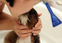 perro-en-la-bañera