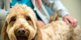 perro-infectado-de-pseudorrabia