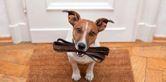 perro-preparado-para-pasear