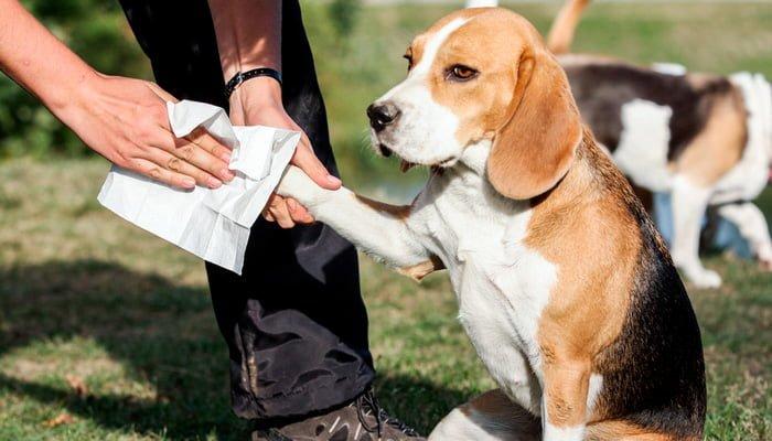 Comment désinfecter un chien contre Covid19