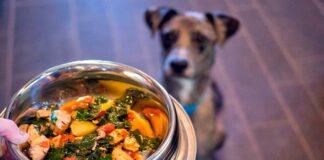 perro-esperando-su-comida-casera