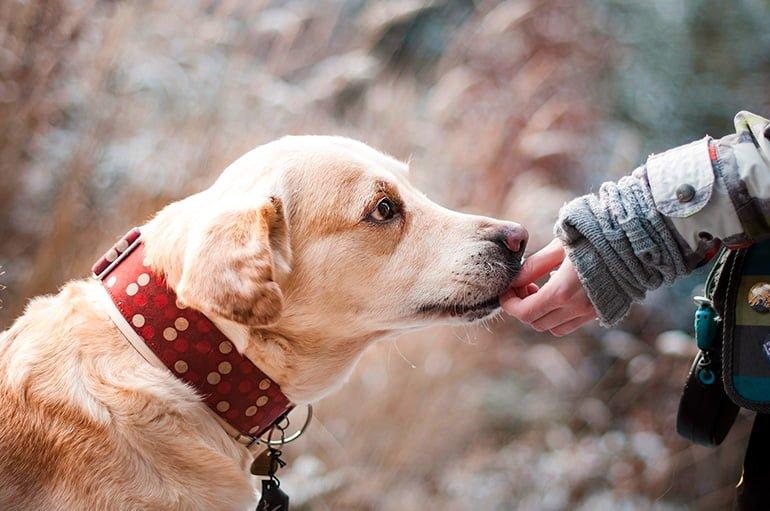 Les meilleures habitudes et routines pour les chiens