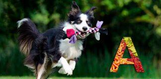 perro-sano-corriendo