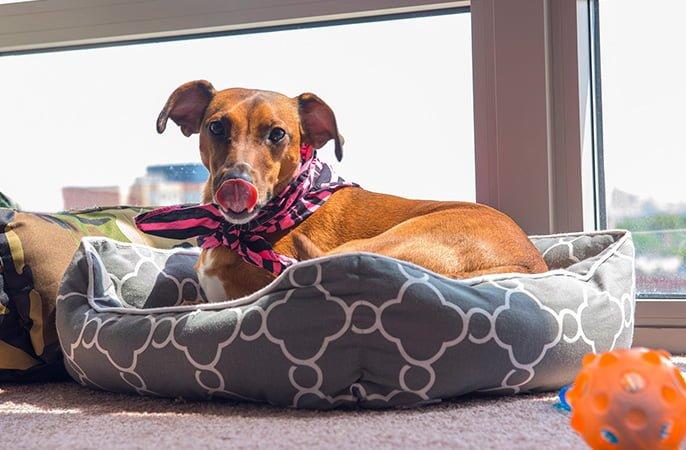 Comment se sent votre chien lorsque vous le laissez seul à la maison?