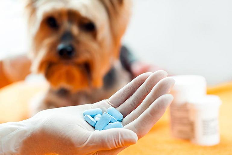 antiestaminicos-para-perros