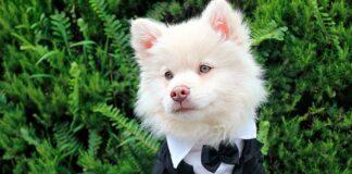cachorro-con-mucha-perronalidad