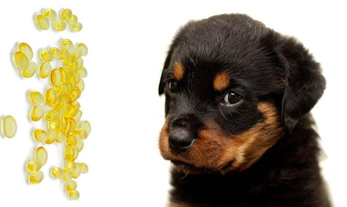 cachorro-de-perro-con-omega3
