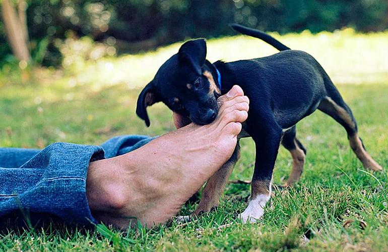 Pourquoi mon chien mord-il mes pieds?