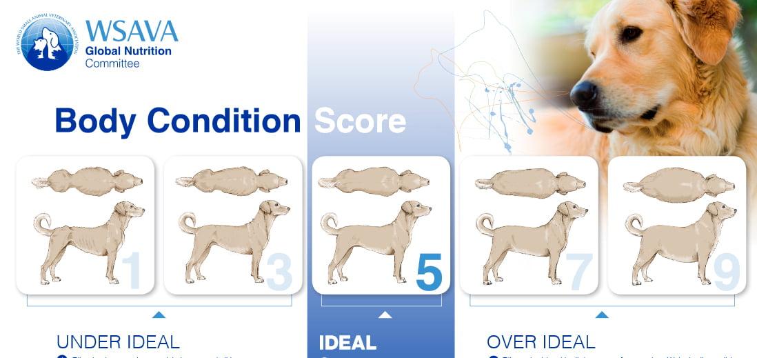 Comment savoir si un chien est en surpoids