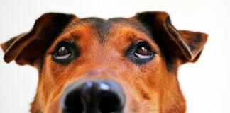 mi-perro-tras-golpearme-con-su-hocico