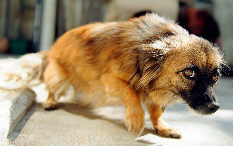 Comment détendre un chien nerveux