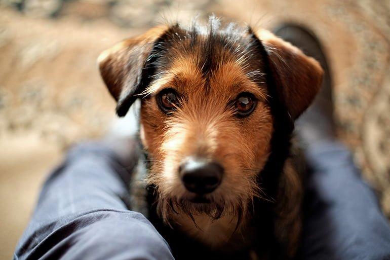 Comment savoir si mon chien a été empoisonné
