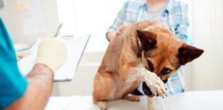 perro-con-tumor-en-el-hocico-en-el-veterinario
