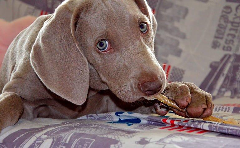 Idées pour divertir un chien seul à la maison