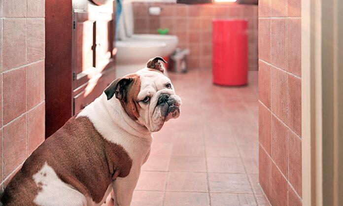 perro-me-acompaña-al-cuarto-de-baño