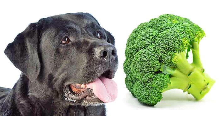 chien et brocoli