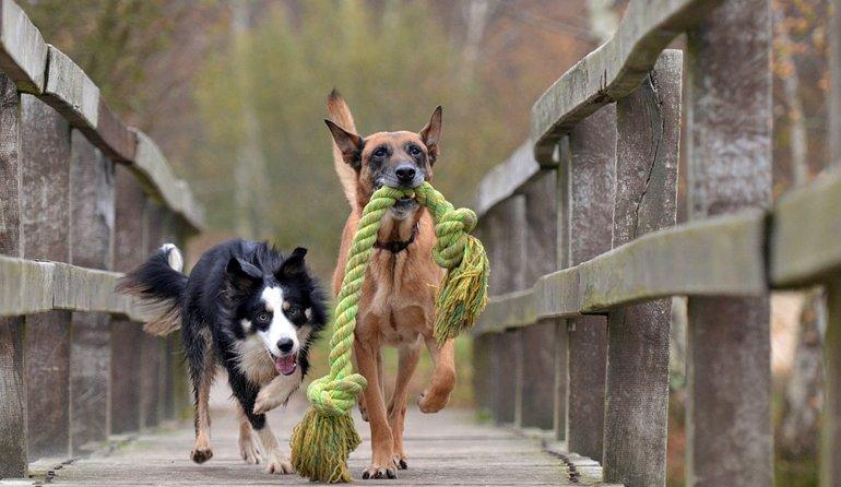 perros-contentos-jugando
