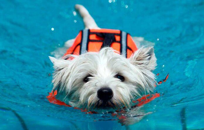 perro-en-una-sesión-de-fisioterapia