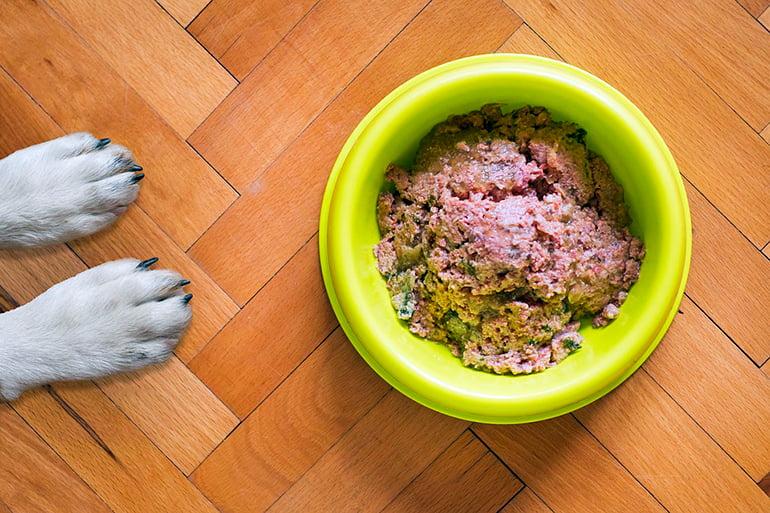 Pourquoi mon chien a-t-il toujours faim?