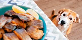 perro-observando-la-comida