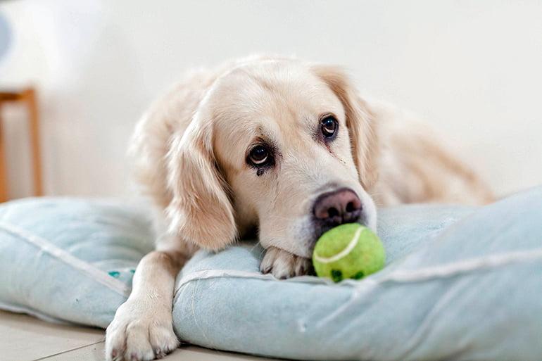 Comment savez-vous si mon chien est triste?
