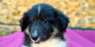 cachorrito-sin-raza