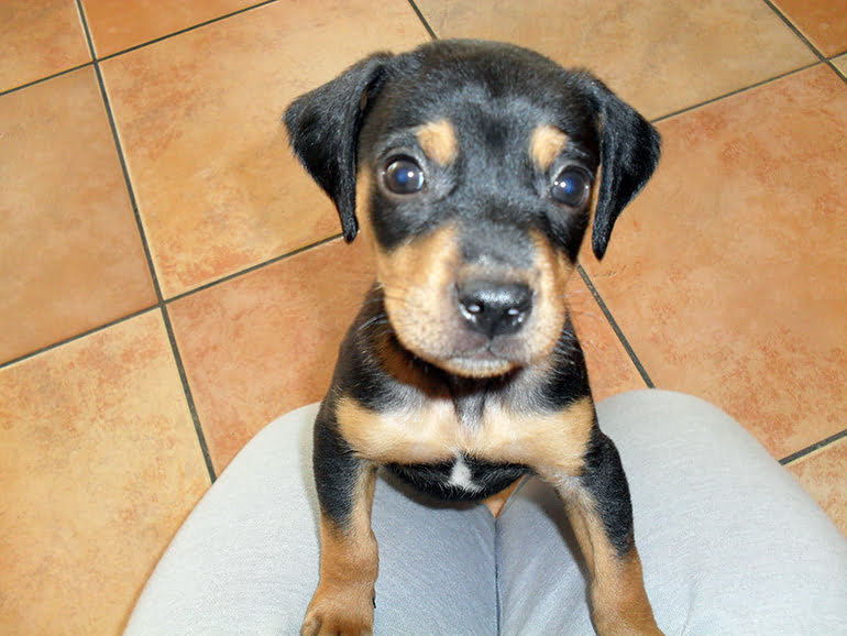 "mongrel-dog-puppy ""width ="" 770 ""height ="" 578 ""srcset ="" https://soyunperro.com/wp-content/uploads/2020/08/mestizo-dog-puppy.jpg 770w, https://soyunperro.com/wp-content/uploads/2020/08/cachorro-de-perro-mestizo-300x225.jpg 300w, https://soyunperro.com/wp-content/uploads/2020/08/cachorro -de-perro-mestizo-768x576.jpg 768w, https://soyunperro.com/wp-content/uploads/2020/08/cachorro-de-perro-mestizo-696x522.jpg 696w, https://soyunperro.com /wp-content/uploads/2020/08/cachorro-de-perro-mestizo-560x420.jpg 560w, https://soyunperro.com/wp-content/uploads/2020/08/cachorro-de-perro-mestizo- 80x60.jpg 80w, https://soyunperro.com/wp-content/uploads/2020/08/cachorro-de-perro-mestizo-265x198.jpg 265w ""tailles ="" (largeur max: 770px) 100vw, 770px"