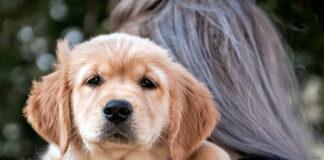 cachorro-de-raza-en-brazos