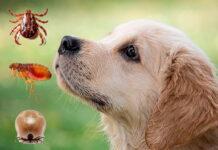 parásitos-y-perro