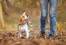 pasear-a-un-perro-sin-correa