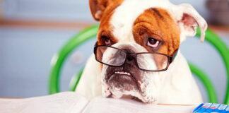 perro-aprendiendo