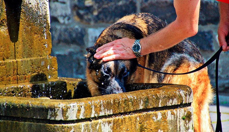 "dog-drink-stagnant-water ""width ="" 770 ""height ="" 444 ""srcset ="" https://soyunperro.com/wp-content/uploads/2020/08/perro-bebe-agua-estancada.jpg 770w, https://soyunperro.com/wp-content/uploads/2020/08/perro-bebe-agua-estancada-300x173.jpg 300w, https://soyunperro.com/wp-content/uploads/2020/08/perro -bebe-agua-stacada-768x443.jpg 768w, https://soyunperro.com/wp-content/uploads/2020/08/perro-bebe-agua-estancada-696x401.jpg 696w, https://soyunperro.com /wp-content/uploads/2020/08/perro-bebe-agua-estancada-728x420.jpg 728w ""tailles ="" (largeur maximale: 770px) 100vw, 770px"