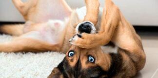 perro-bocaarriba-en-el-pasillo
