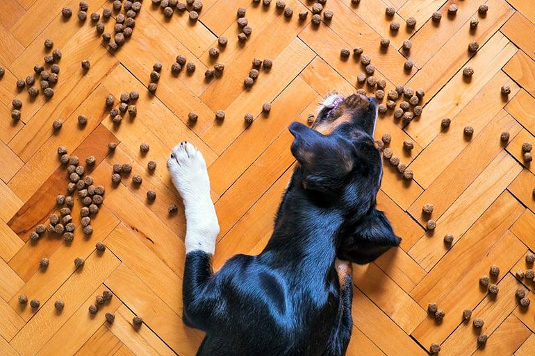 Que mangent les chiens? Types de nourriture pour chiens