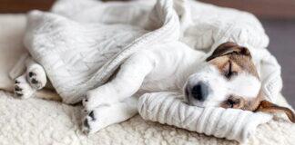 perro-duermiendo-y-temblando