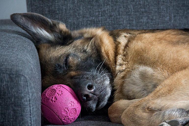 Où dormir un chien?