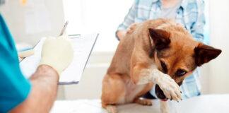 perro-en-veterinario-para-castración